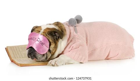falling asleep reading - english bulldog with boring book isolated on white background