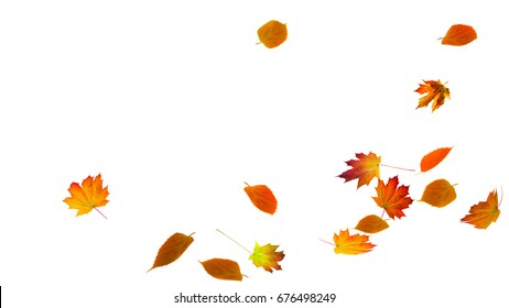 falling autumn foliage on white background, isolated colorful fall leaf