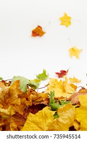 falling autumn leaves on a white background