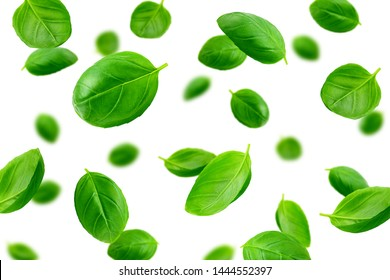 Falling basil, isolated on white background, selective focus