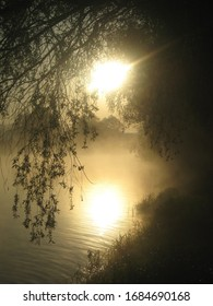 The falling branches of a weeping willow create a dark curtain through which you can see the yellow rising sun in golden fog, the riverbank and their reflection in calm water