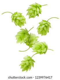 Falling green hop, isolated on white background, clipping path, full depth of field