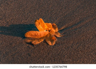 falling leaf in the sand