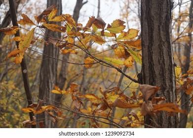 A falling leaves