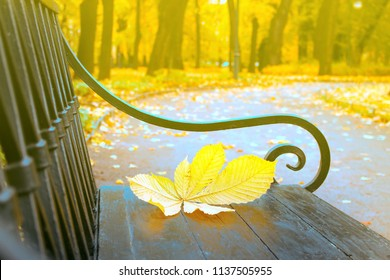Falling leaves. Autumn in city Park in yellow leaves. Yellow maple leaves on garden bench, sad mood of past summer