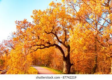 Falling Leaves Colorful Fantasy