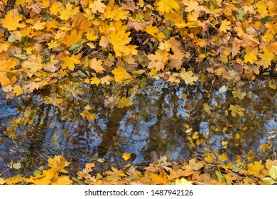 Falling leaves over the creek in the autumn.