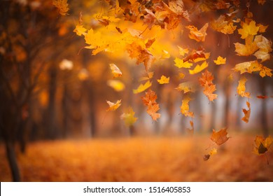 Falling maple leaves in the park. Bright gold autumn time. Abstract image, non focus. Copy space