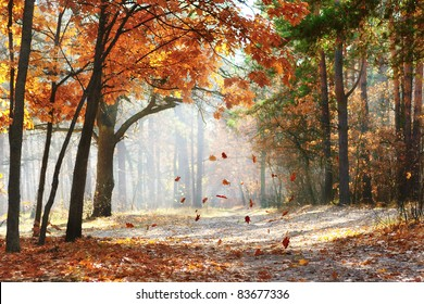 Falling oak leaves on the scenic autumn forest illuminated by morning sun