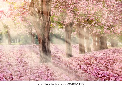 Falling petal over the tunnel of pink flower trees Romantic cherry blossom on nature background in Spring season