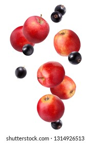 Falling red apples and black currant isolated on white background. The fruit as a whole.