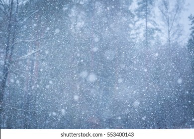 Falling snow background. Close up of falling snow flakes on forest background. Winter christmas composition.