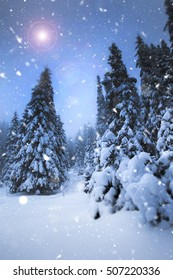 Falling snow in heavy winter. Landscape with pine trees for a Christmas background.