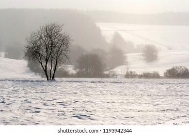 Falling snow in the winter landscape in back light