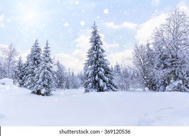 Falling snow in the winter spruce forest