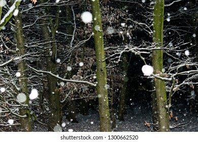 falling snowflakes in closeup in the dark forest. Location: Germany, North Rhine-Westphalia, Borken