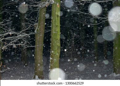 falling snowflakes in close-up in the evening. Location: Germany, North Rhine-Westphalia, Borken