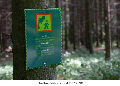 Falling trees sign on a tree in the forest, sign in Czech, English and German language