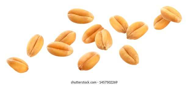 Falling wheat grains isolated on white background with clipping path, close-up
