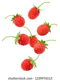 Falling Wild strawberry isolated on white background, clipping path, full depth of field
