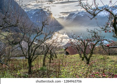 Fallout apples in the garden . Photo from Flo in Oppstryn , with the Oppstryn lake in the background . In Norway .