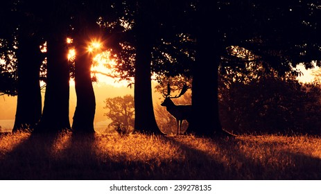 A fallow deer behind some trees early morning, silhouette