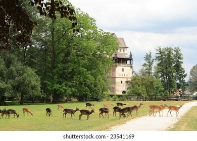 Fallow deers and Blatna castle, Czech Republic.