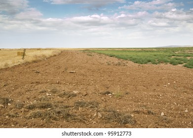 Fallow field in an agricultural landscape in Ciudad Real Province, Spain. Weeds growing on the ground are clumps of Saltwort (Salsola kali)