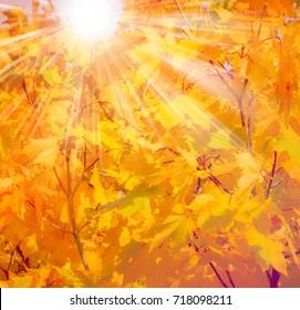 Falls Beauty nature scene. Autumnal Park, Autumn Trees, Autumn forest in Seasonal nature