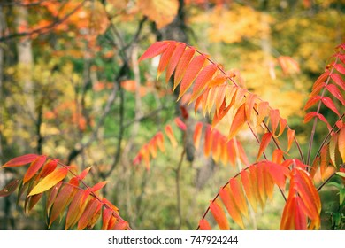 Falls leaves against a forest background.