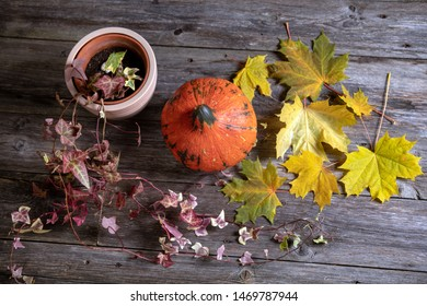 fall-still life with pumpkin, ivy and yellow maple leaves on wooden ground from above