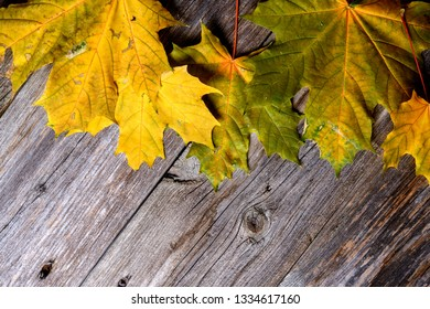 fall-still life with yellow maple leaves on wooden ground in top view