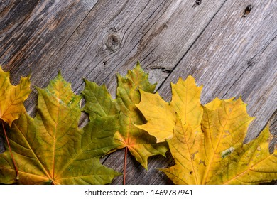 fall-still life with yellow maple leaves on wooden ground