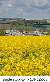 Falmer, Sussex UK-May 1st 2018: Looking over a Canola/Rapeseed field towards Brighton and Hove Albions AMEX Stadium on a sunny spring day