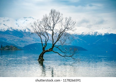 The famed 'Lone Tree of Wanaka' stands isolated against New Zealand's Southern Alps. Winter landscape, snow covered mountain peaks, cloud reflections illuminated in the lake