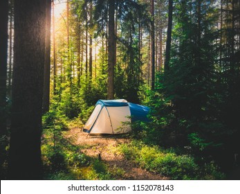 Family camping tent under sunshine in the wood. Hiking trip to the wilderness.Pine wood background. Travel photo.