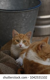 Family cats father and son