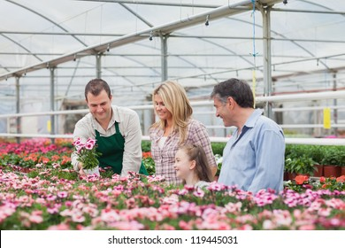 Family choosing a flower with employee in garden center of greenhouse