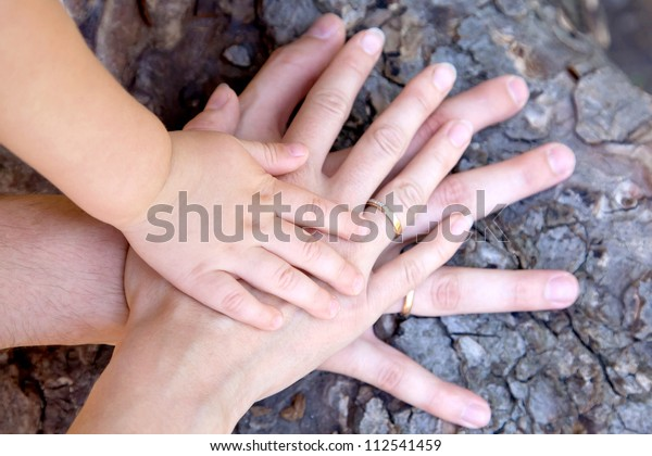 Family concept.Three hands of the family on the tree bark - baby, mother and father. Selective focus on infant handle. Unity, support, protection and happiness. Ready for your logo on the hands