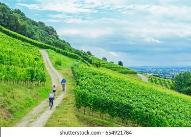 Family cyclists on grape mountain.  Biking travel tour in Europe, Badische Weinstrasse ( Baden Wine Street ) , Baden, Germany