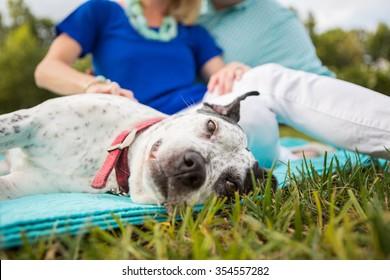 Family dog enjoys a belly rub outside