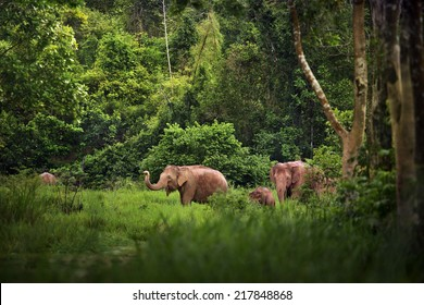 A family of Elephant