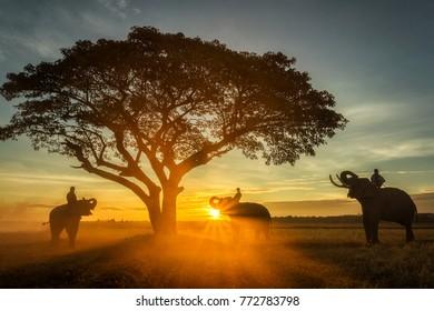 Family elephant eating leaves at sunrise.
