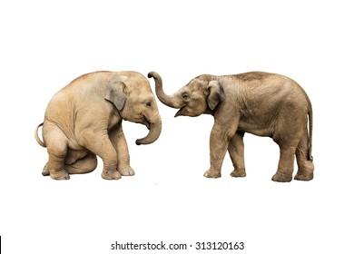 Family elephant on isolated.