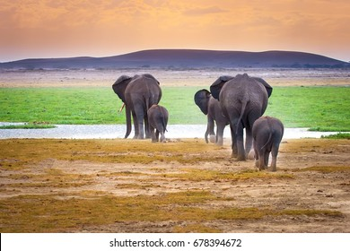 Family of elephants. Elephants go to the water. Africa. Kenya. Tanzania.