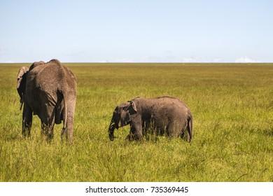 Family of elephants in Kenya Africa Serengeti Nature Park