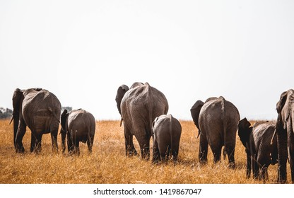 family of elephants in masai mara national park