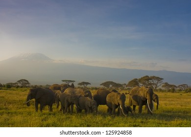Family of elephants on a background of Kilimanjaro
