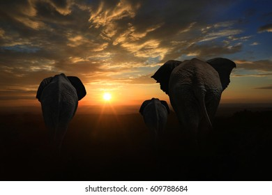 Family of Elephants Walking Into the Sunset