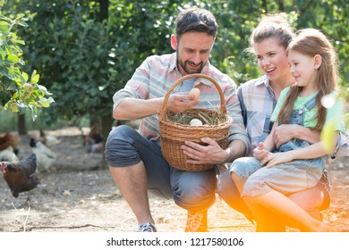 Family of Farmers putting organic eggs in a brown basket on their farm with chickens in the background